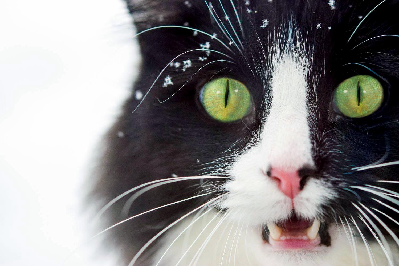 Caras cat loves the snowfall