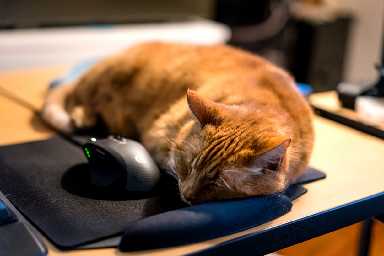 Cat and mouse. marlowe helping me try out my new fancy camera
