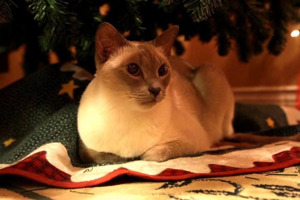 Christmas tree guardian angel