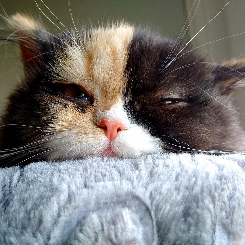 Curious sleepy kitten o