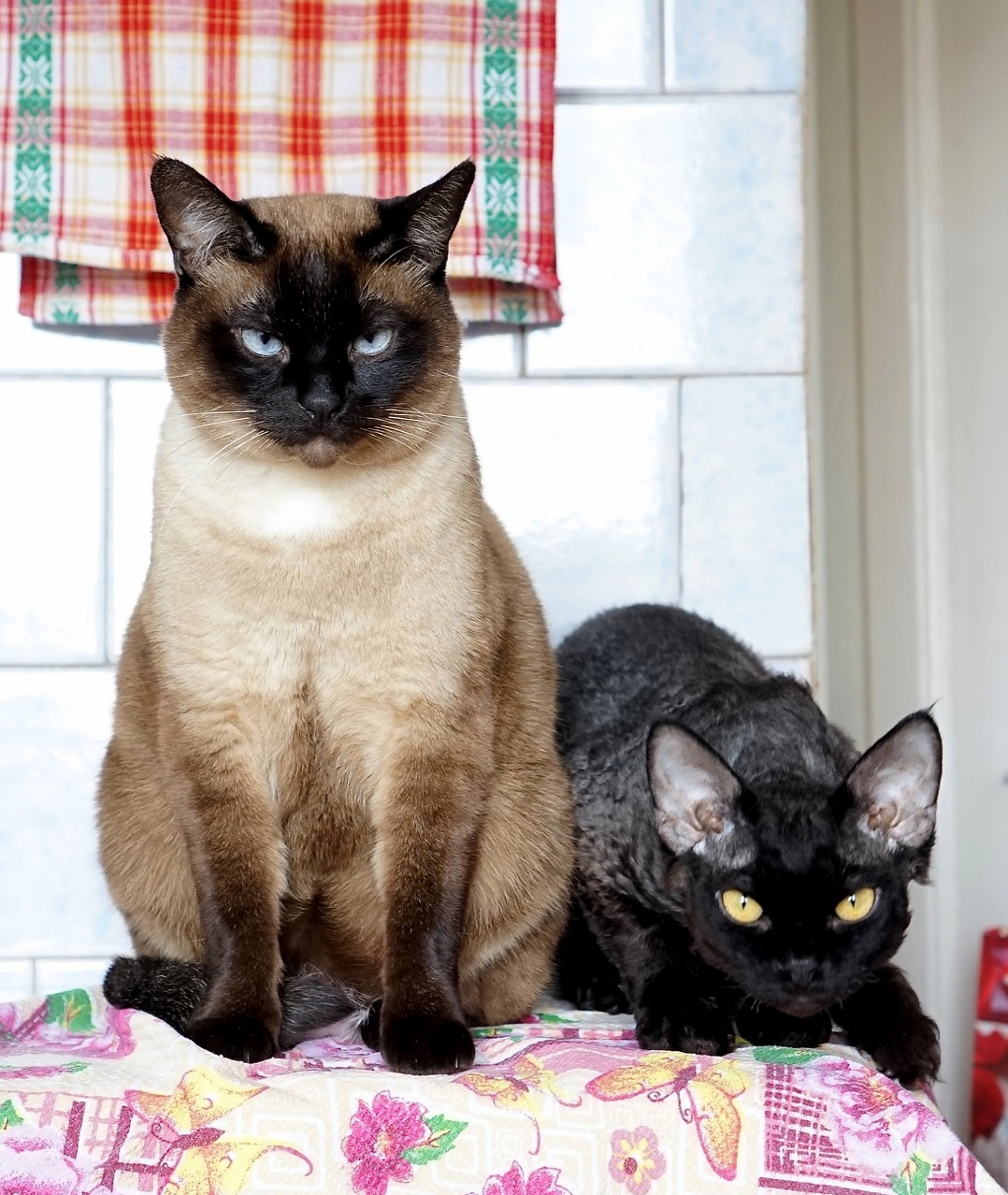 Gloomy and tricky cats – amper and volt