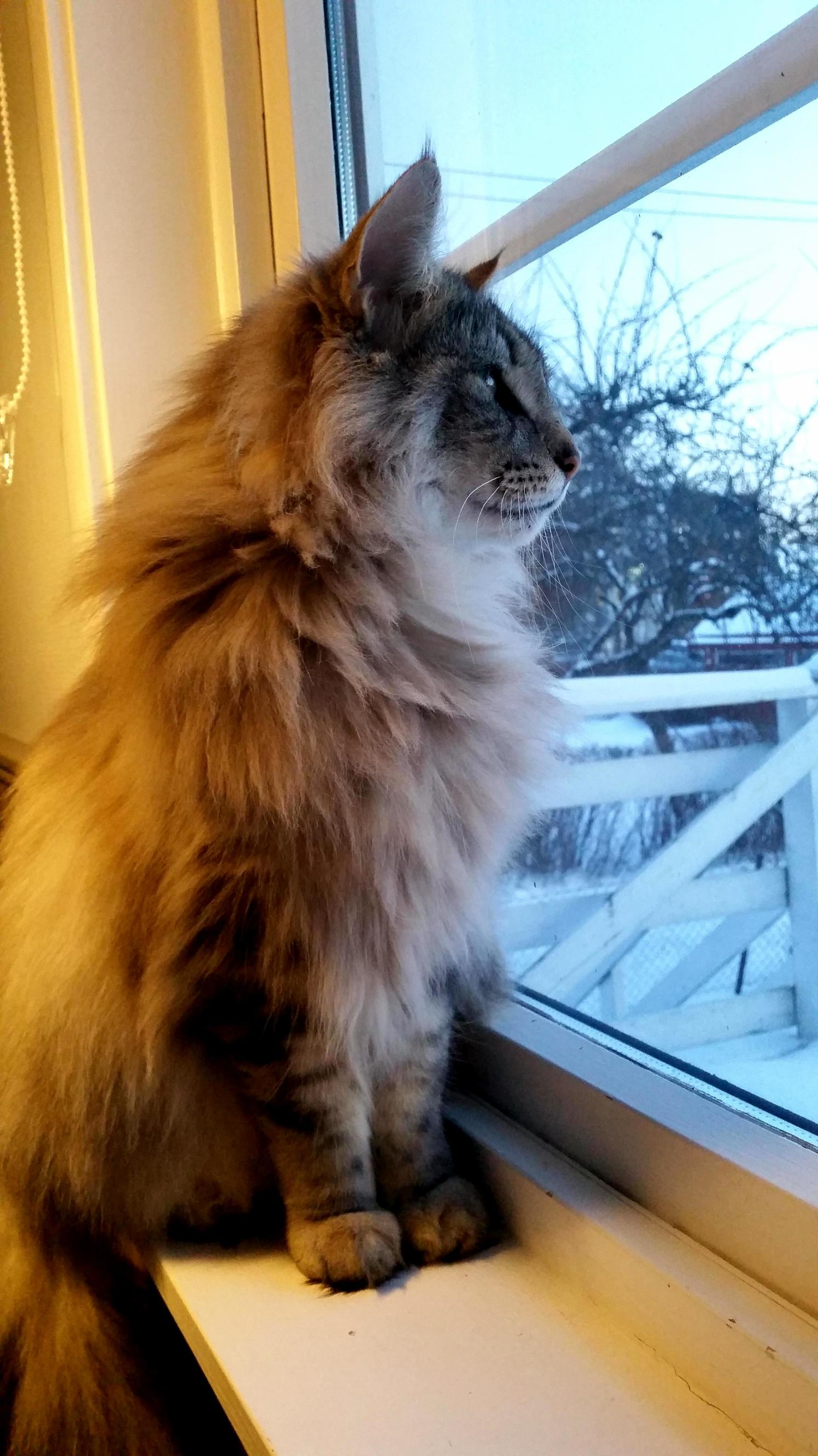 He likes to sit in my window during the winter.