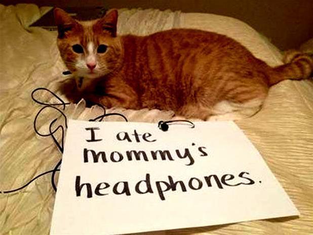 I ate mommys headphones.