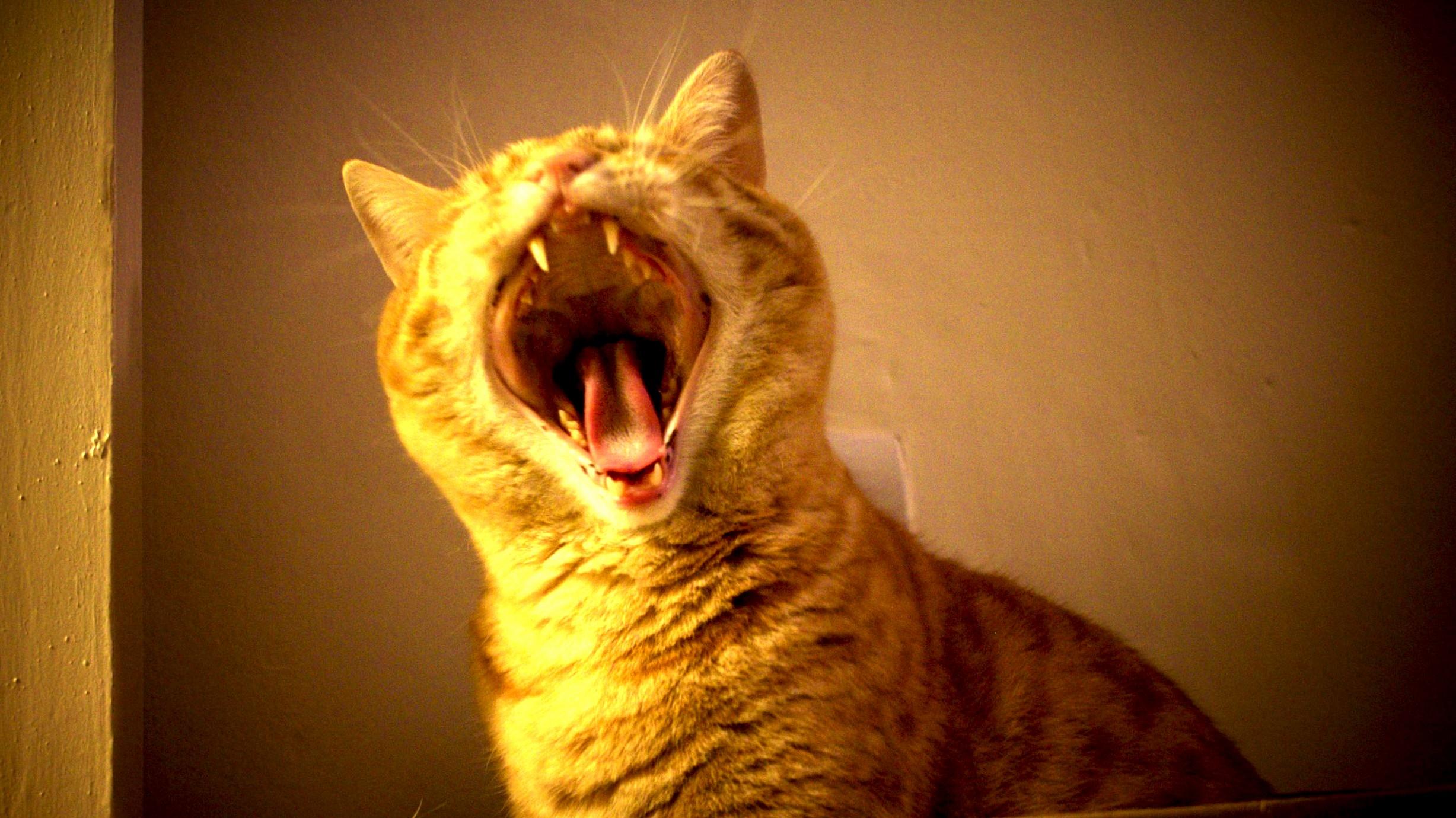 I caught him mid-yawn