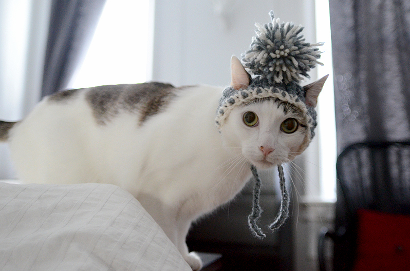 I crocheted this hat for my cat booker