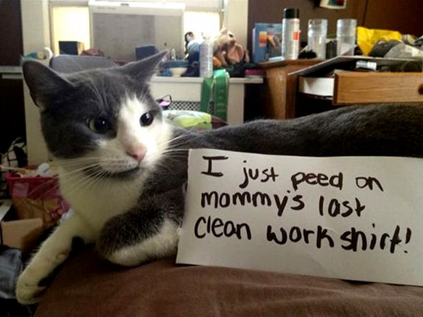 I just peed on mommys last clean work shirt