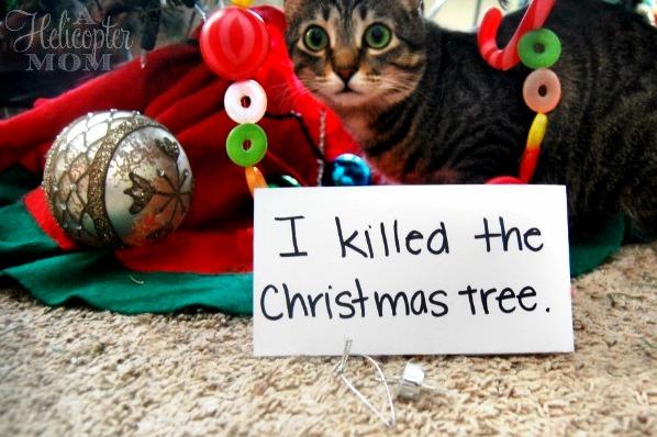 I killed the christmas tree.