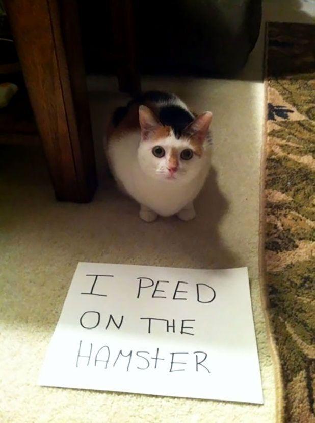 I peed on the hamster.
