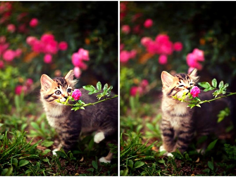 Kitten smelling a flower