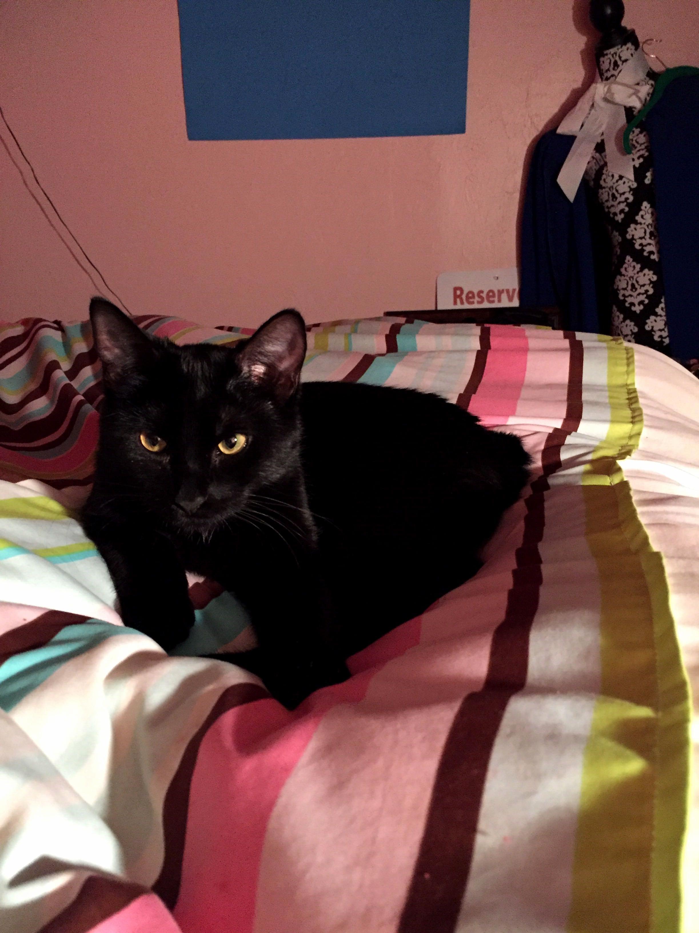 Kylo the kitty kat