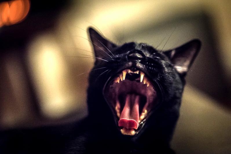 Meowwww