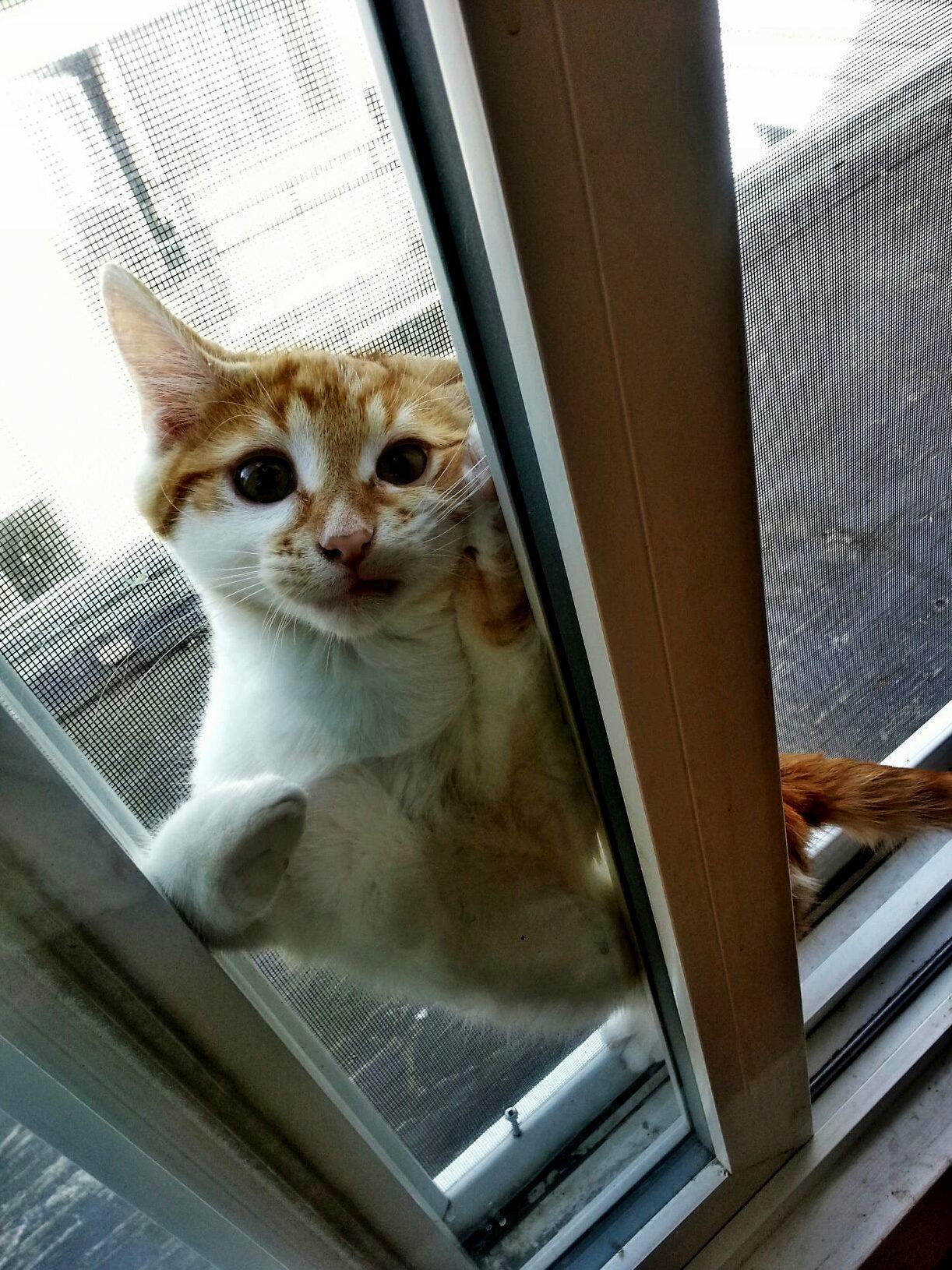 Funny Cats Im A Towel