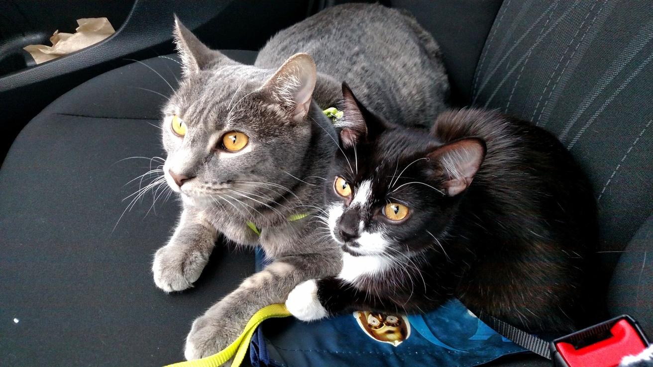 My cats like car rides.
