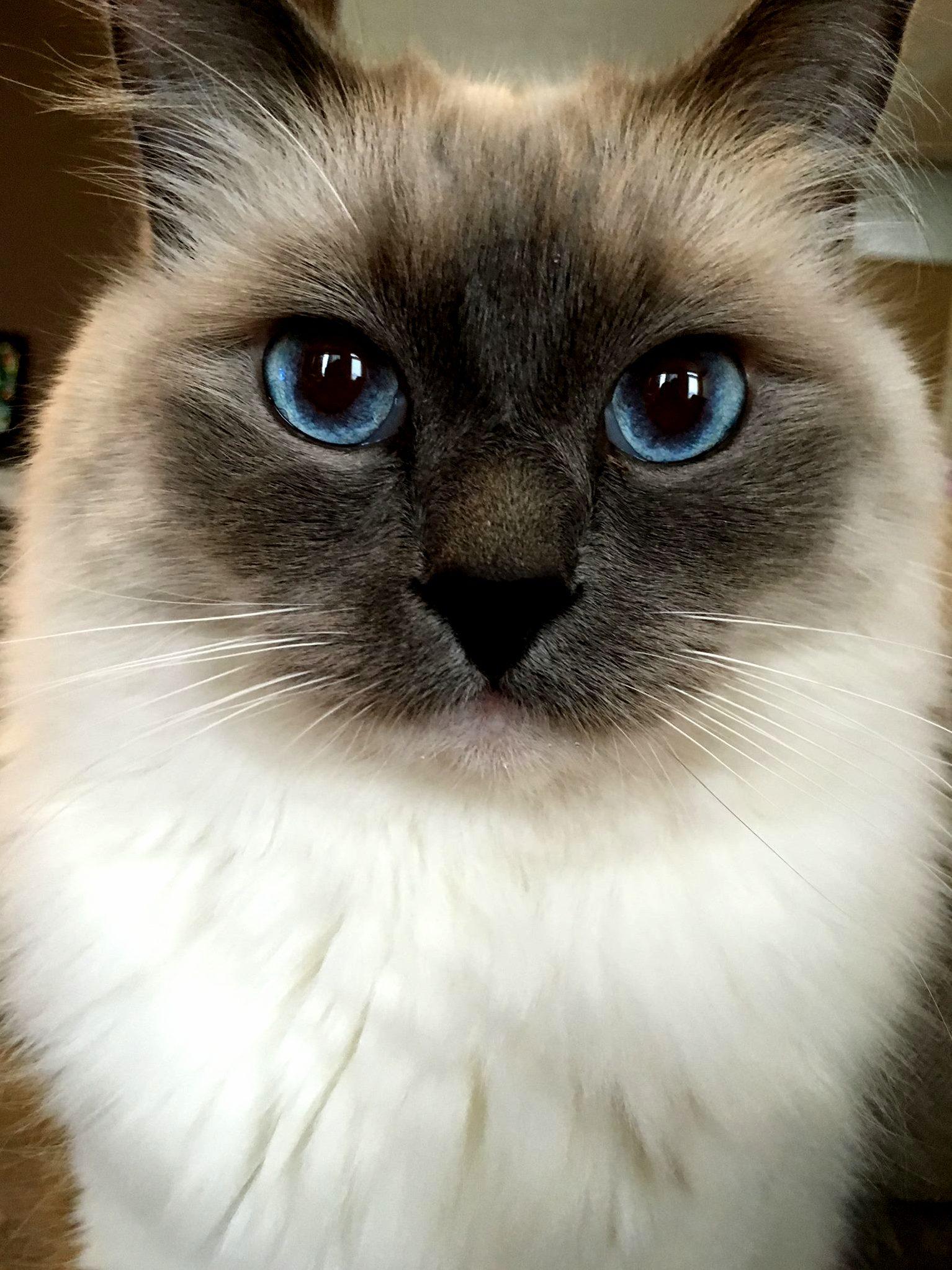 My yoshi showing off his pretty blue eyes