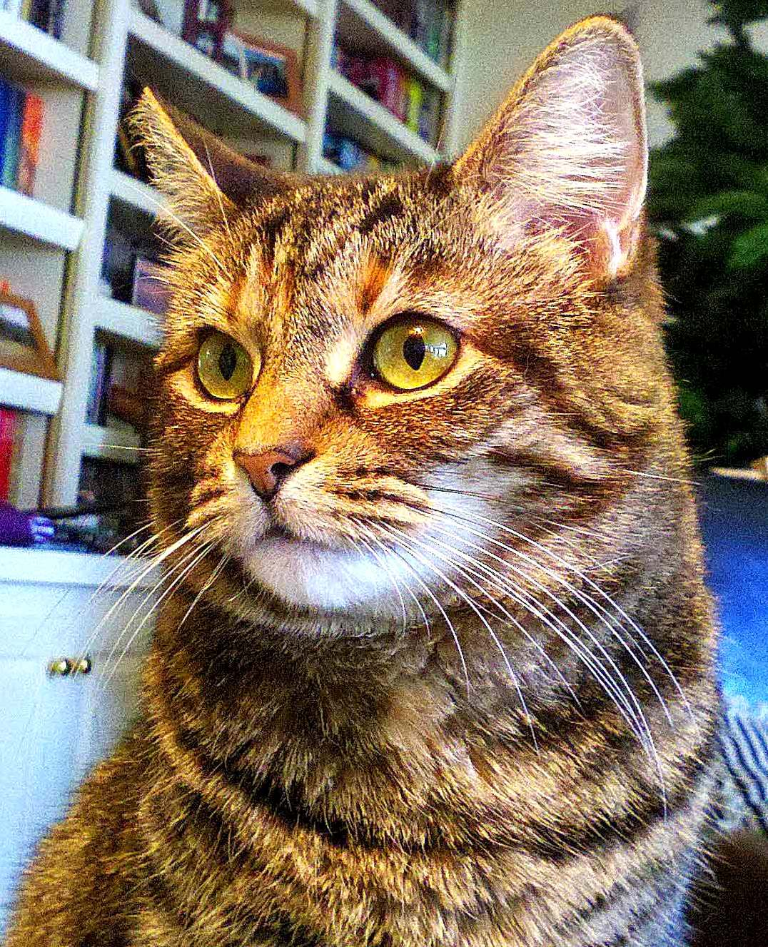 Our very bossy cat molly ivins