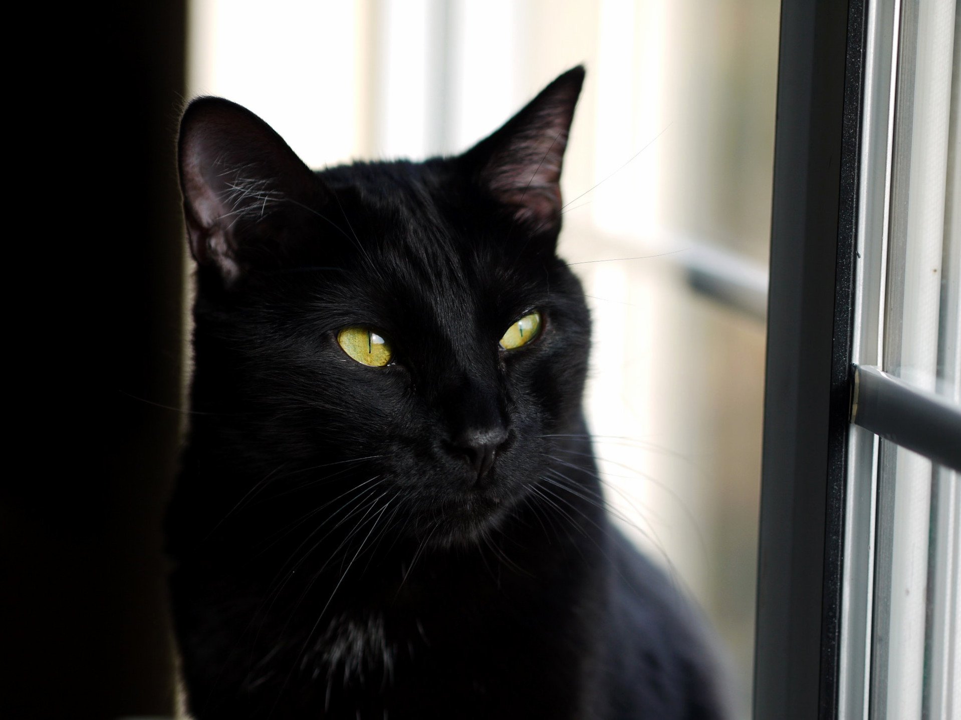 Panther near a window. album in comments