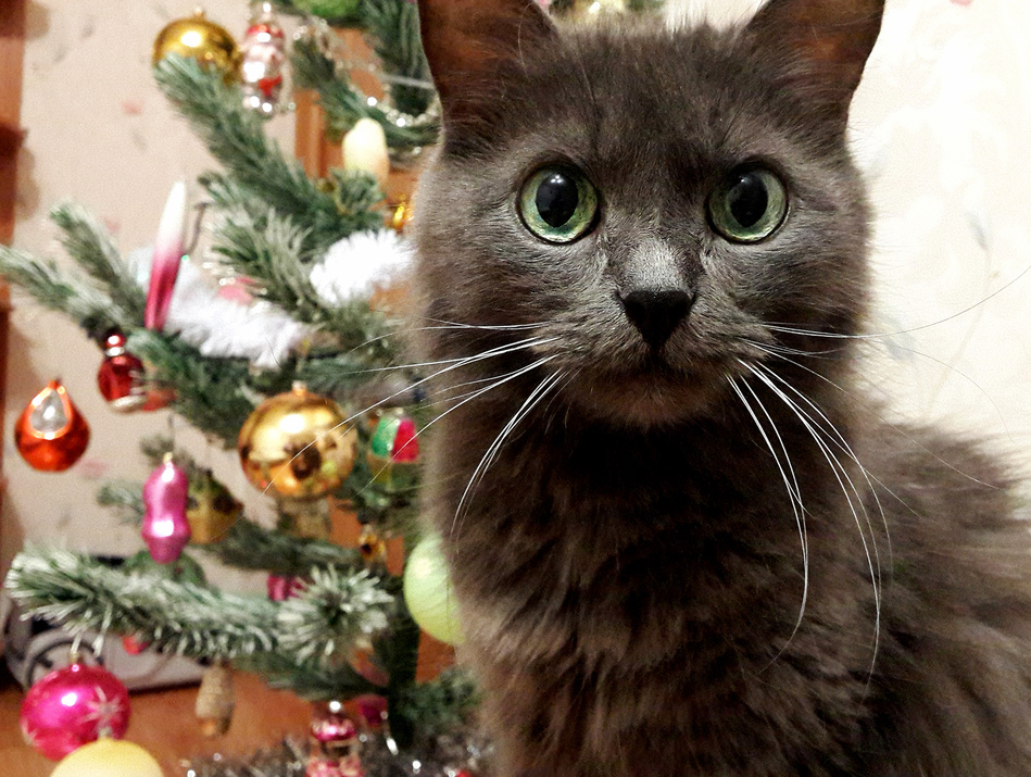 Posing by the christmas tree