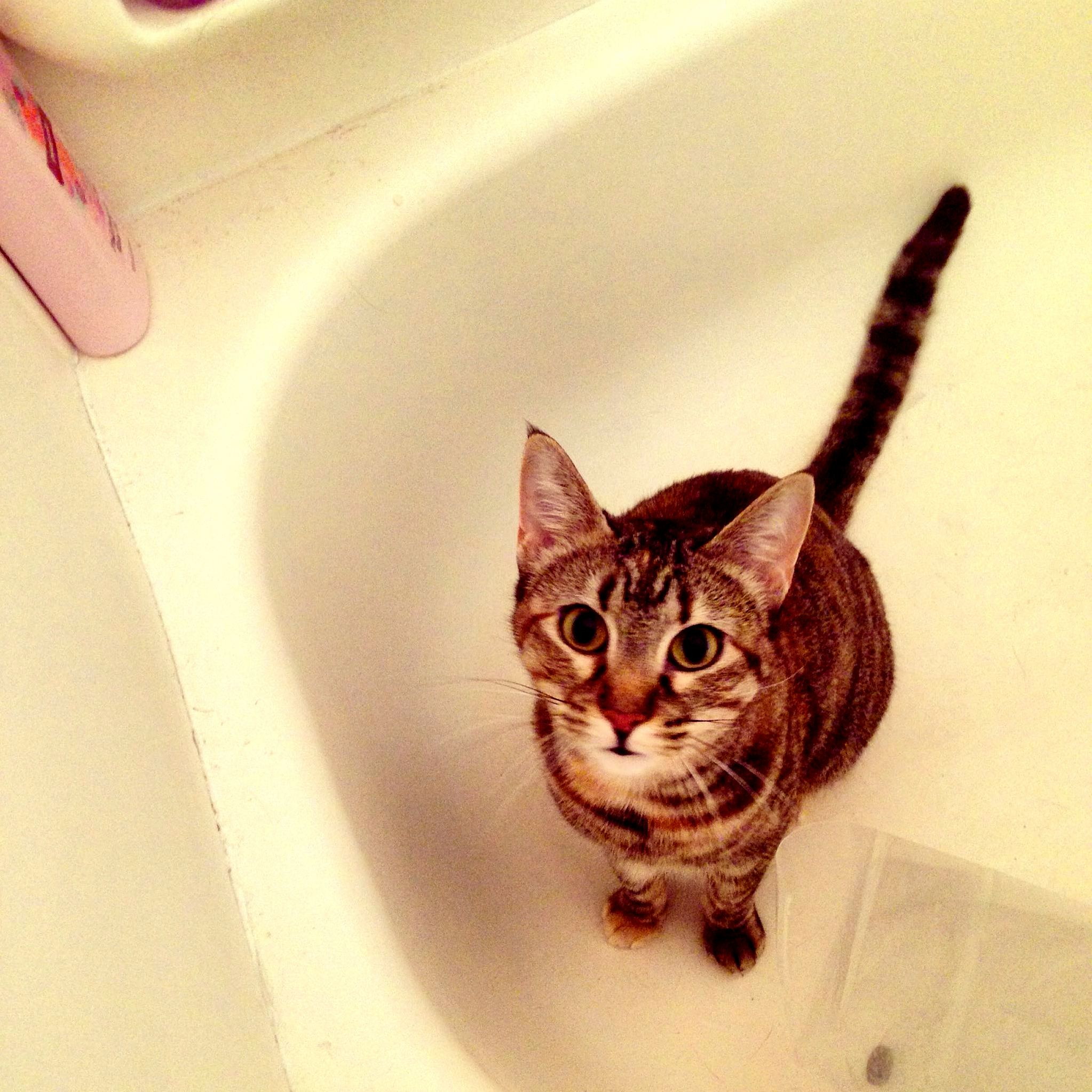 She loves playing in the tub.