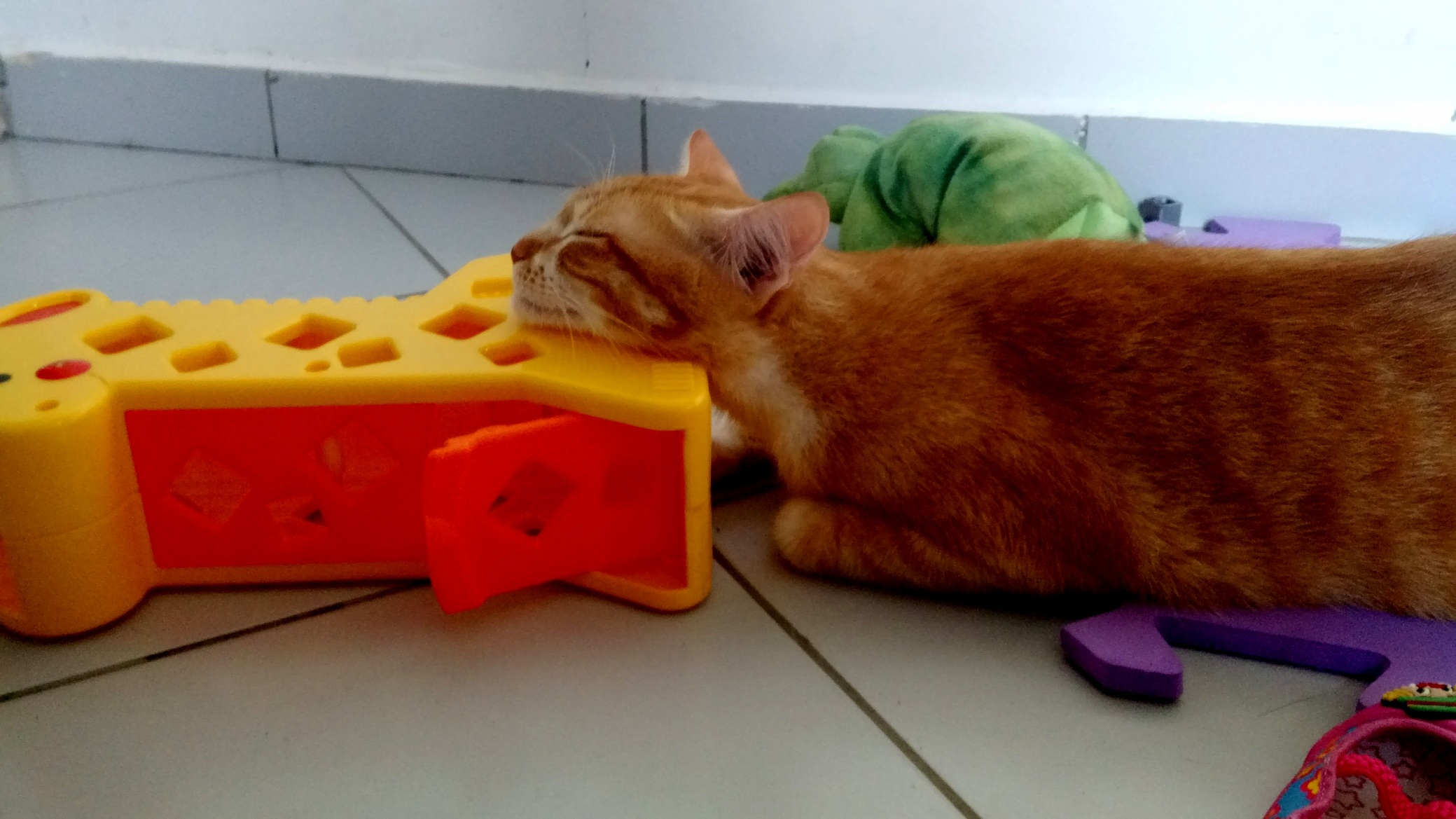 Thats my cat sleeping on my daughters toys