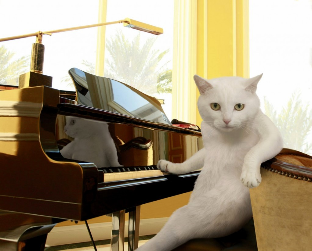This cat is a piano expert…