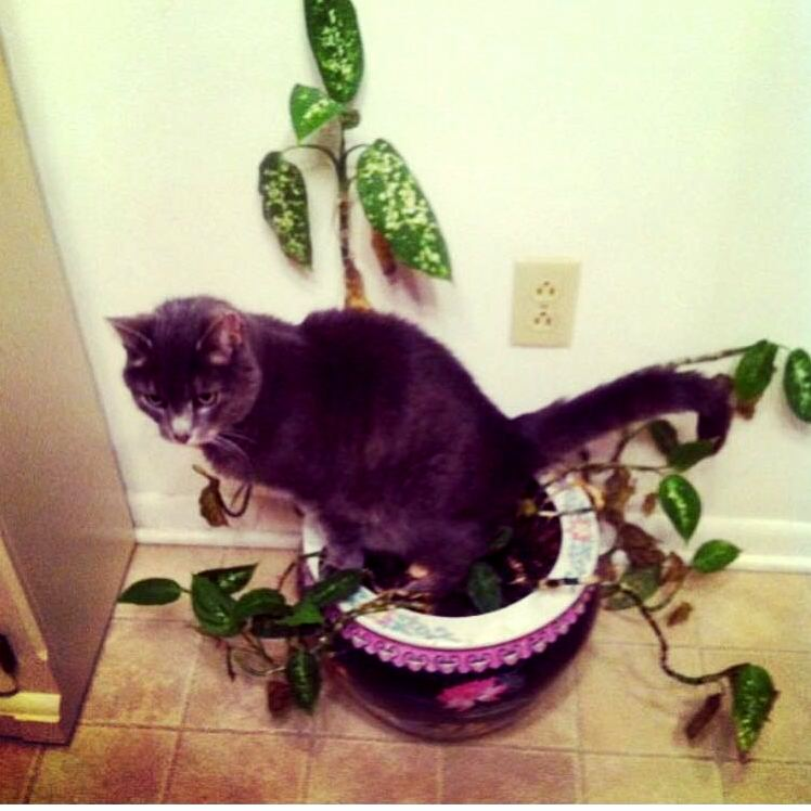 We kept wondering why the house plants were dying…