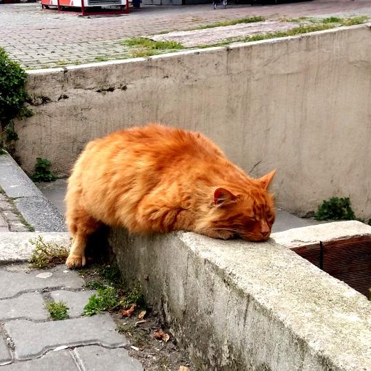 A magestic orange creature