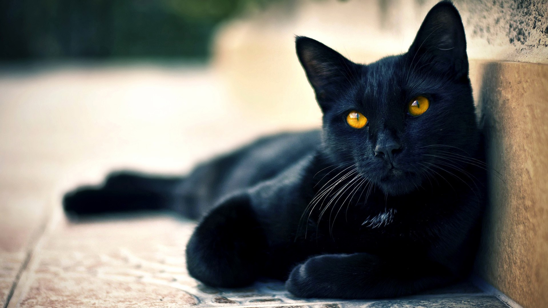 Black cat…love it baby