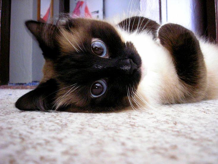 Blue-eyed baby.