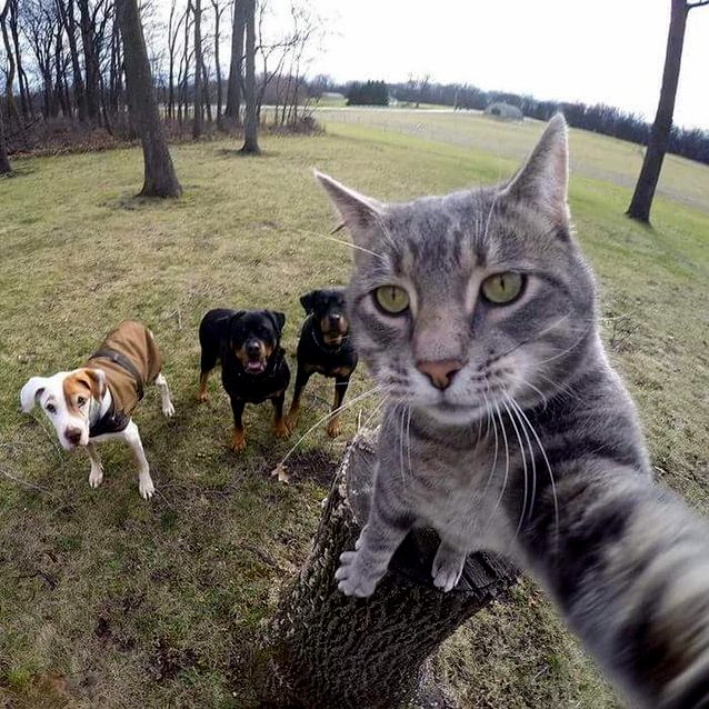 Cat taking a selfie with his buddies
