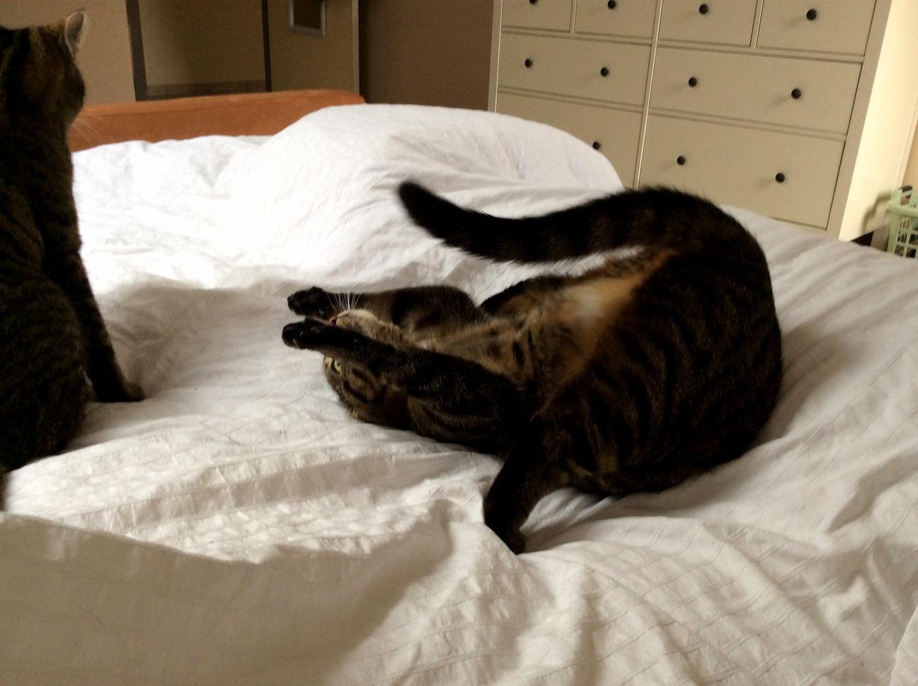 Cat yoga –