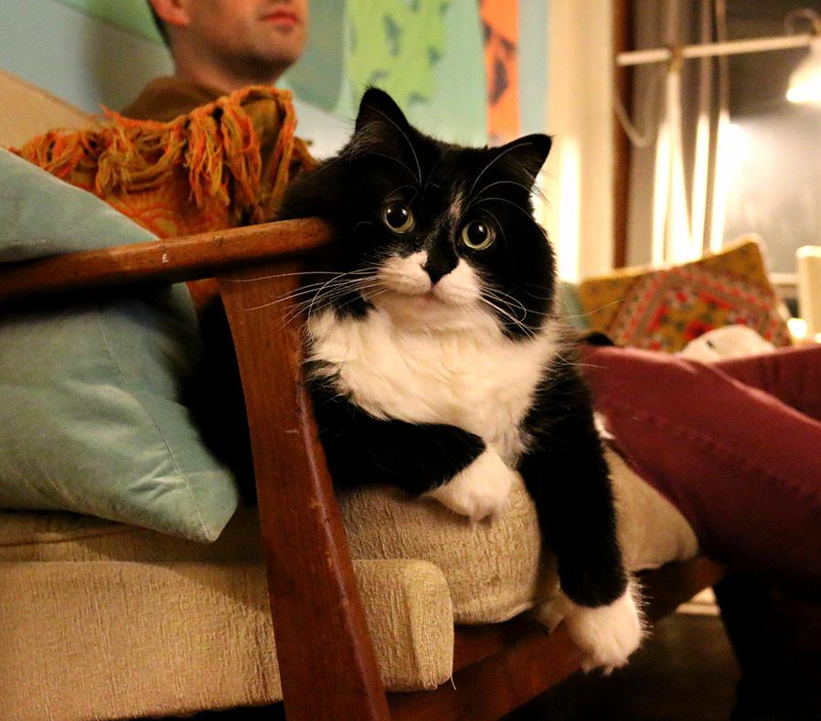 Darcy my fluffy tuxedo cat