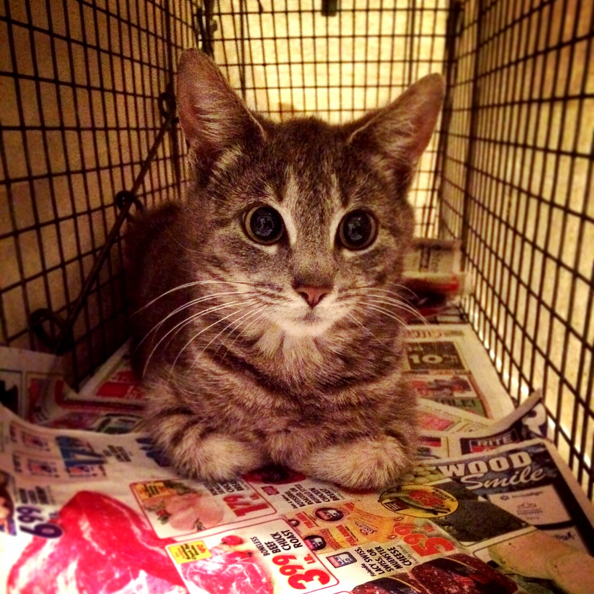 Feral cat update being very brave and off to the vet tomorrow for a spay and eartip