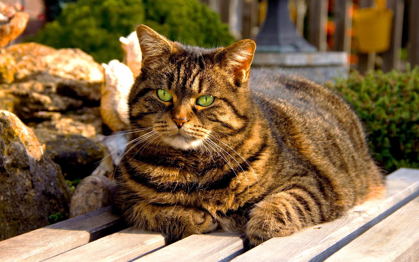 Fluffy fat cat