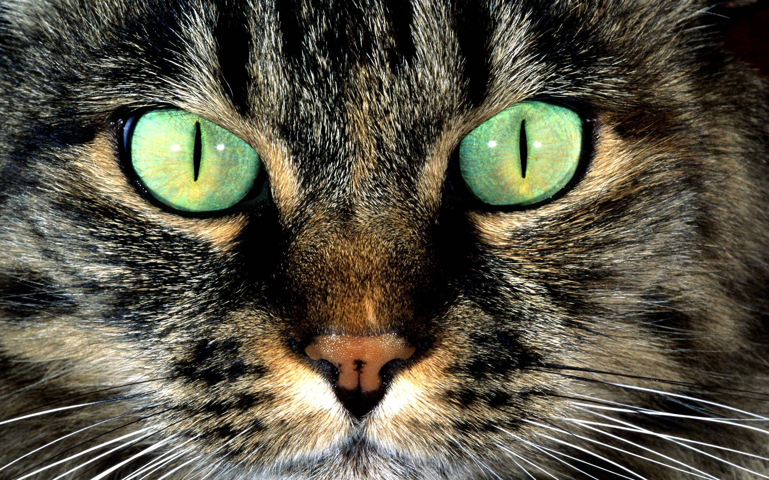 Green eye cat close up