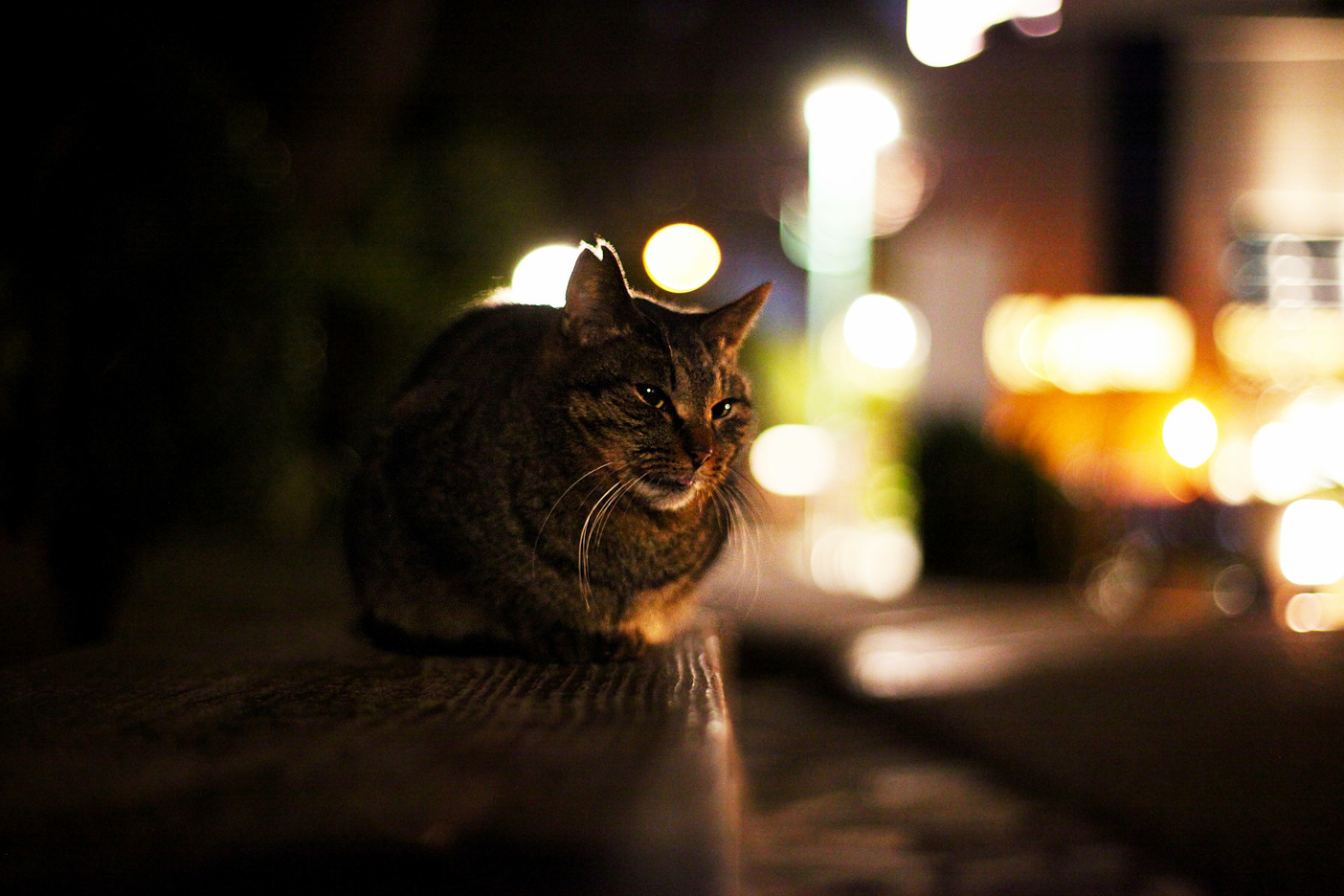 Saw a cat in the park by yotsuya station tokyo when walking by.