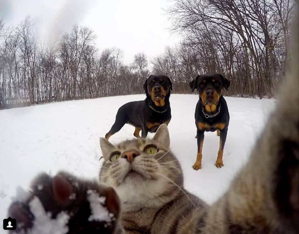 Selfie cat