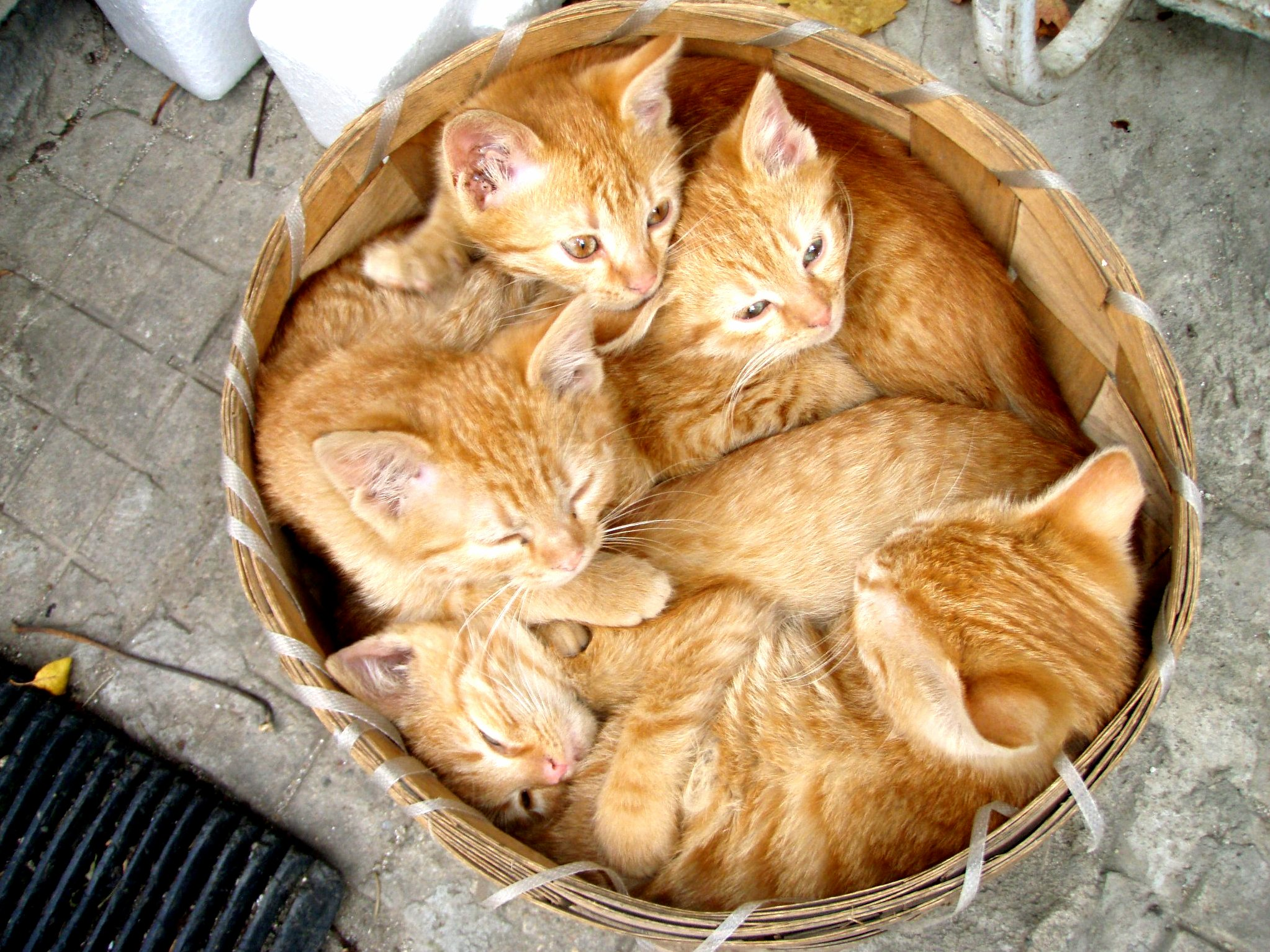 So showed me this ginger kitty harvest he had a few years ago