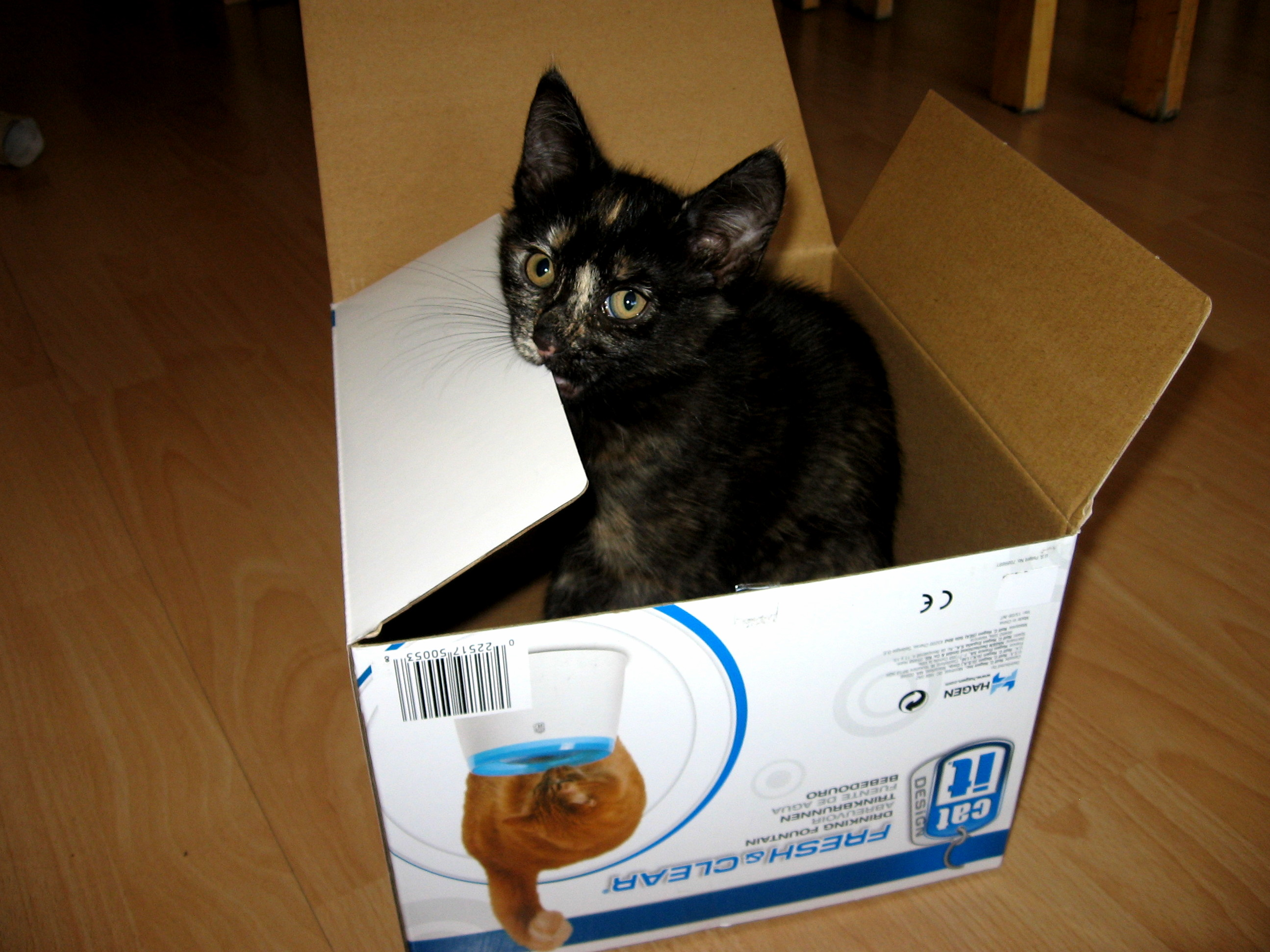 The love of cats for boxes is inborn…
