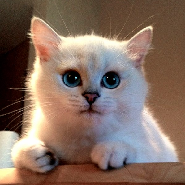 This cat has incredible eyes