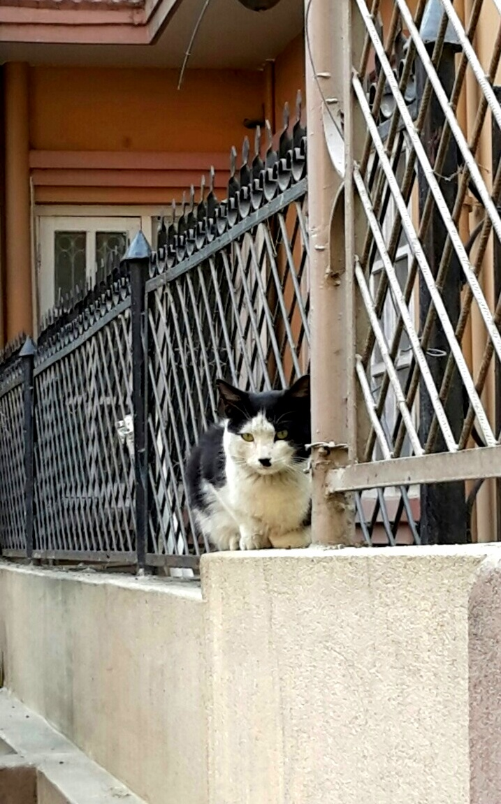 This hitler cat comes to visit my cats everyday
