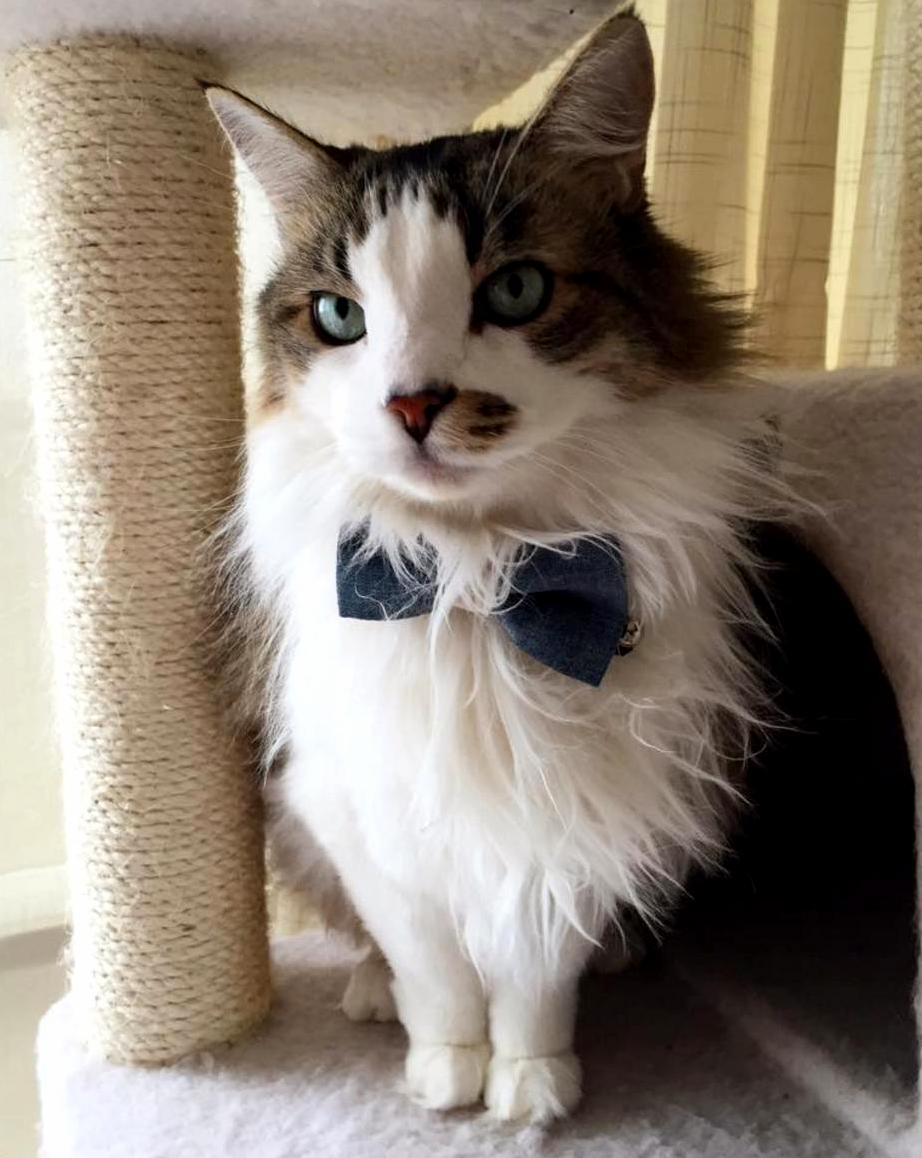 Birthday boy in his first bow tie
