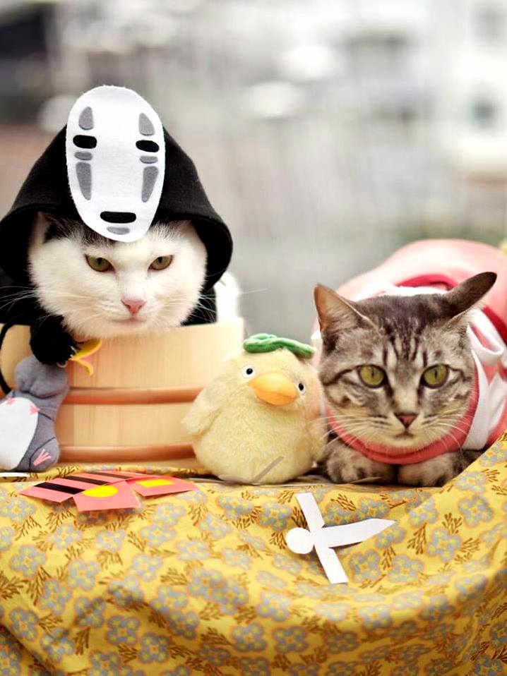 Cats cosplaying spirited away