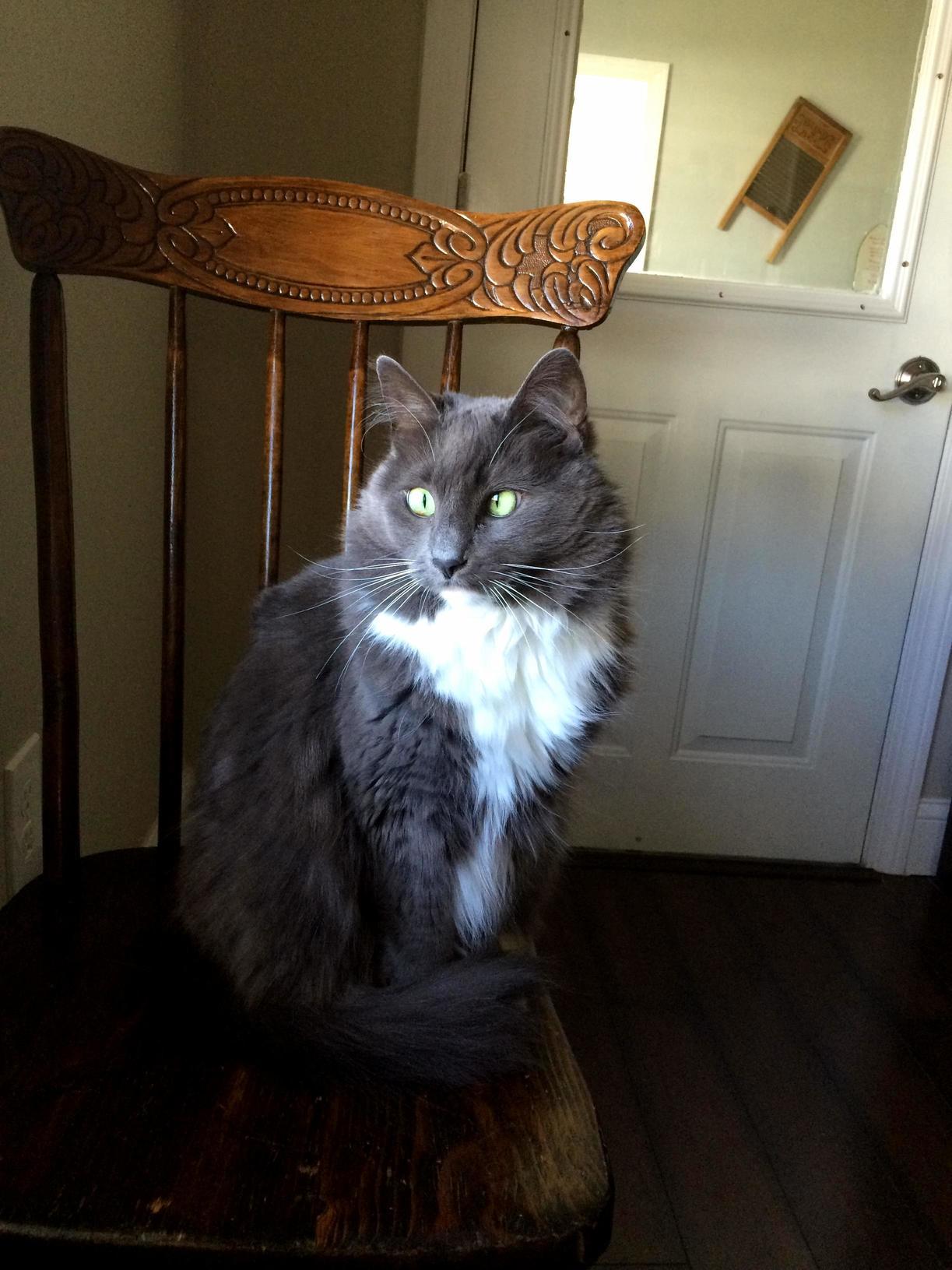 My fluffy grey cross-eyed model