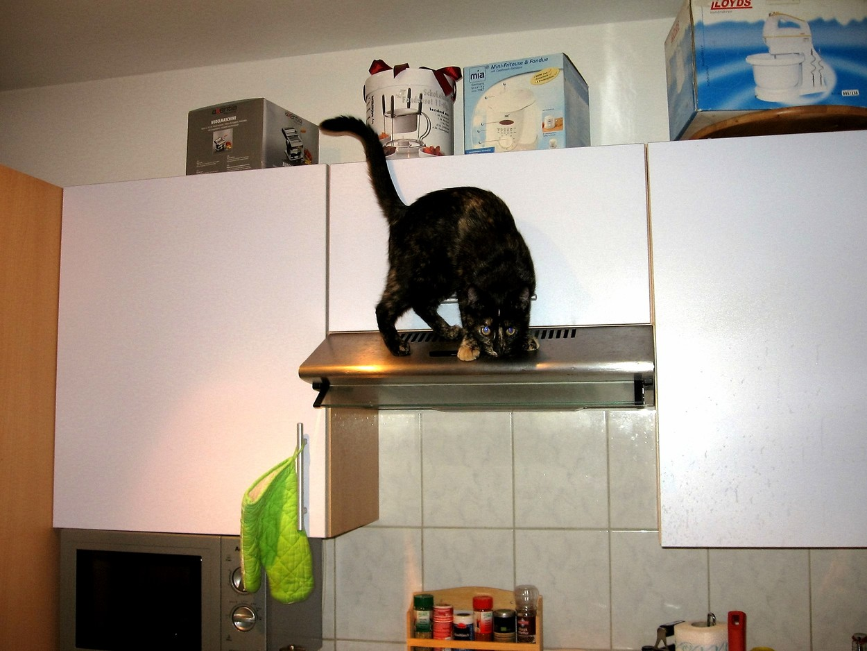 The cat on the exhaust hood