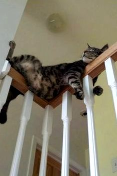 Cats in funny places