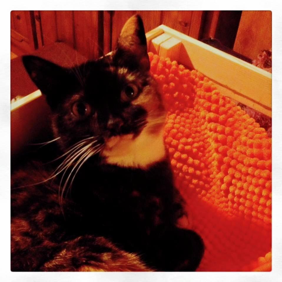 Ikea wooden crate bath mat happy allie cat