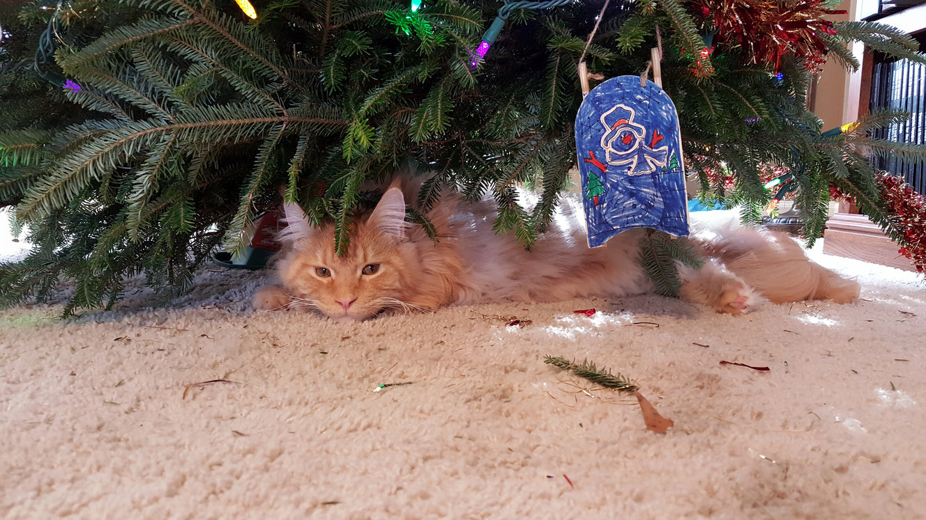 Andy is taking a break from a busy morning of tree destruction.