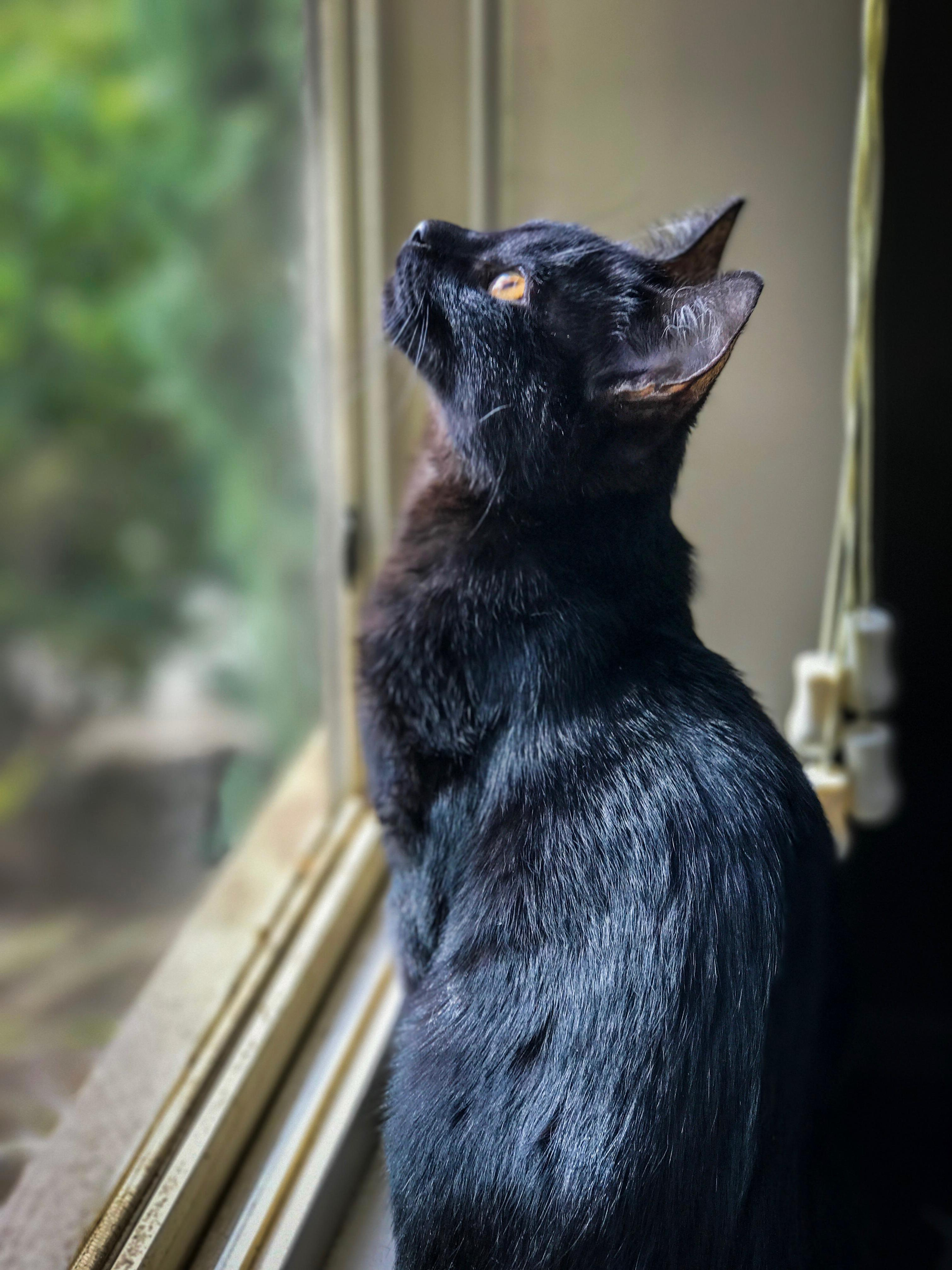 Archie watching rain fall for the first time.