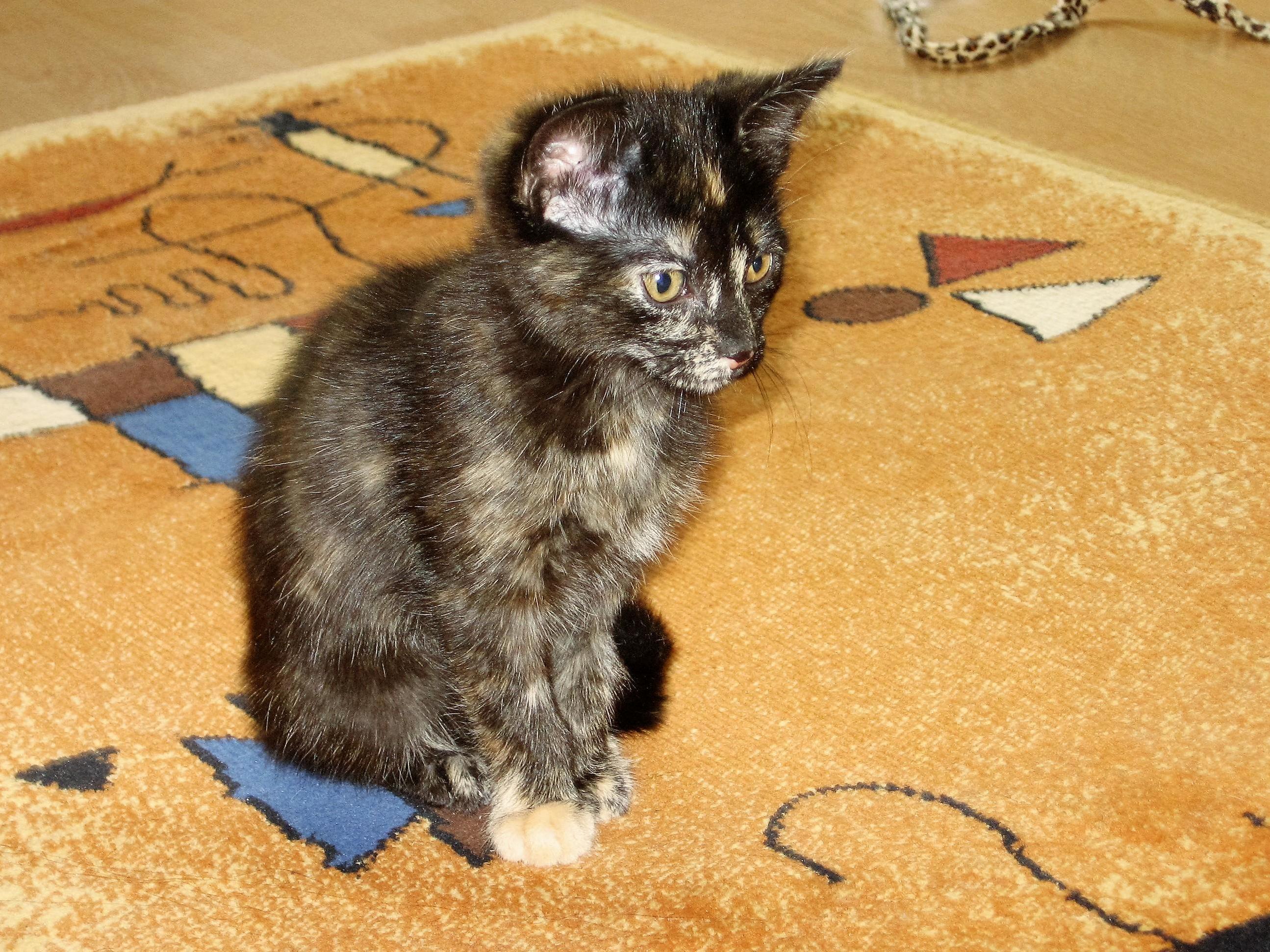 Arya was quite the sweet kitten