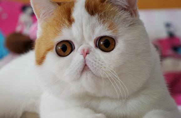 Brown eyed cat 3
